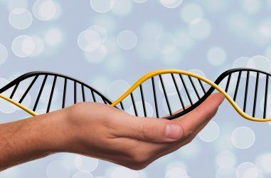 Modification de l'ADN - CRISPR/Cas9
