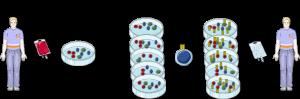 méthodologie de génération des CAR-T cells