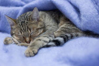 La narcolepsie est un trouble du sommeil