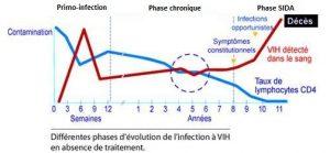 Schéma représentant les 3 phases de l'infection : primo-infection, phase chronique et phase SIDA